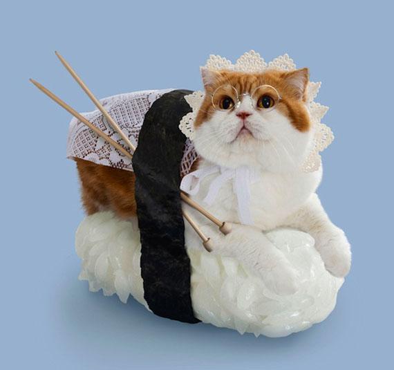 Sushi Cat Knitter
