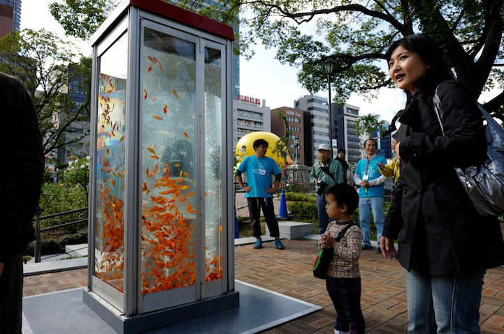 Goldfish-Phone-Booth-Aquarium-2
