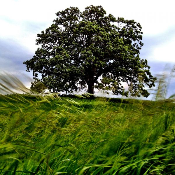 that-tree-photographer-mark-hirsch-becomes-one-with-an-oak-tree-in-lovely-documentary-project-photos-1369853956_b