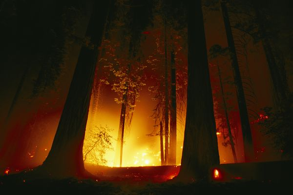sequoias-survive-fire_70716_600x450