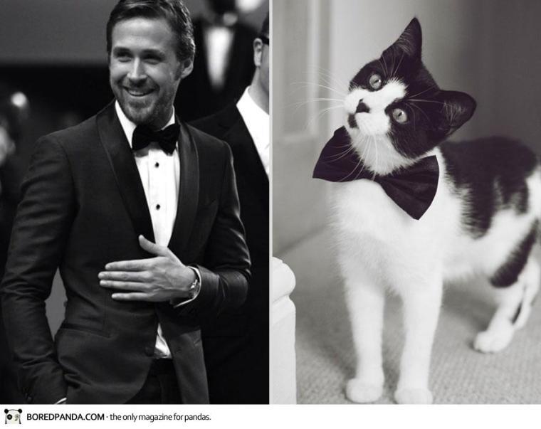des-hommes-et-des-chatons-men-and-cats-2-3
