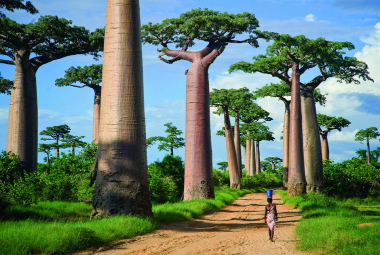 avenue-of-the-baobabs-madagascar