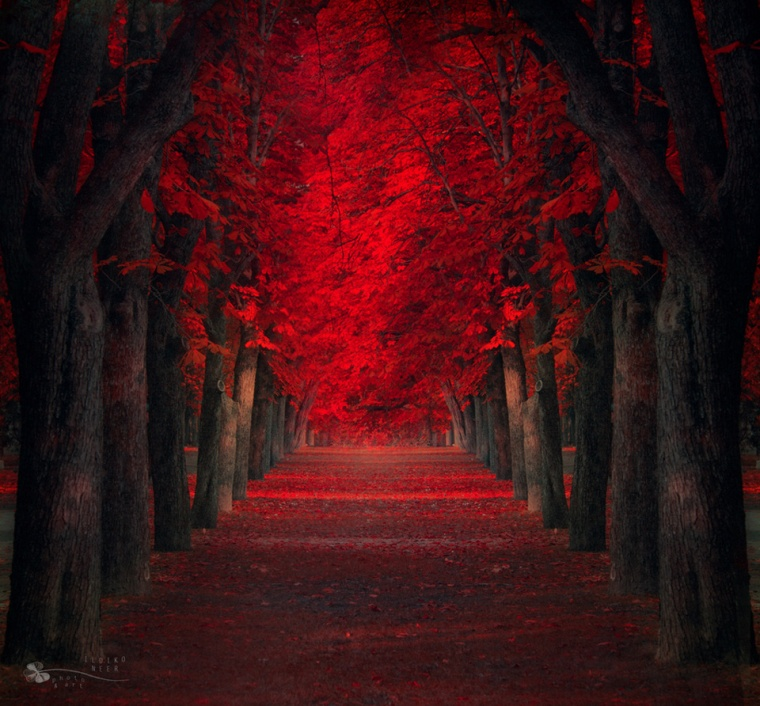 red-maples-trees-path
